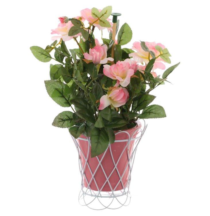 Цветов, купить цветы в горшке витебск